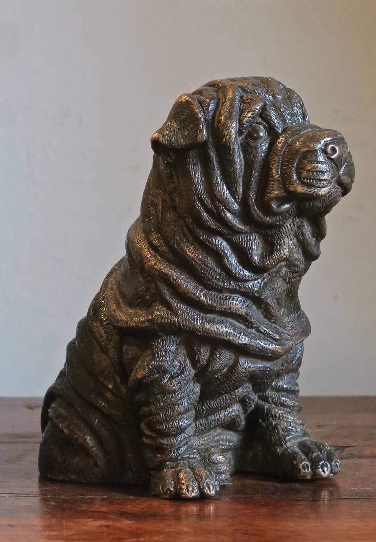 Bronze Shar Pei puppy
