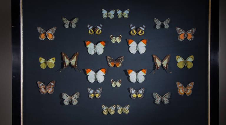 Butterflies in V&A frame (B)