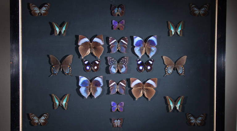 Butterflies in V&A frame (C)