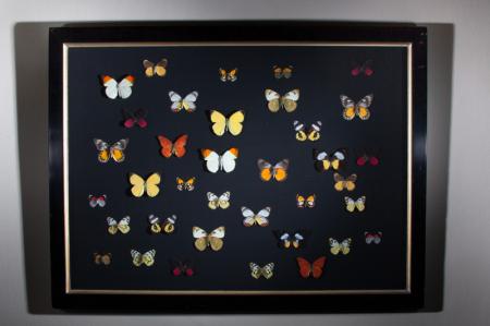 Butterflies in V&A frame (D)
