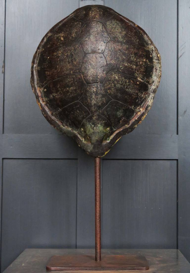 19th Century Turtle shell on stand